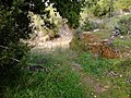 Ρέμα κοκκιναρά 1 - panoramio.jpg