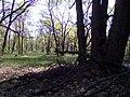 Апостоловский лес сова 2.jpg