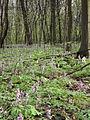 Голосіївський ліс9.JPG