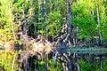 Долина ручья Песковатка(Ретинская Дарья) (4).jpg
