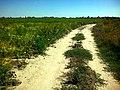 Дорога по полю - panoramio - EugeneLoza.jpg