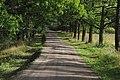Дубовая аллея - дорога к скиту Всех святых.jpg