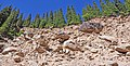 Еловый лес на валунно-галечнике. Юго-восточный Казахстан. Boulders and fir-trees. Eastern Kazakhstan.JPG