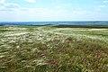 Ковыльная степь в пору цветенья - panoramio.jpg