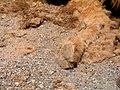 """Копито верблюда пристосоване для пустель і має своєрідну """"подушечку"""".jpg"""