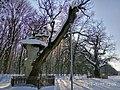 Кочубеївські Дуби у Регіональному ландшафтному парку «Диканський» 10.jpg