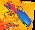 Кристаллы олиготиофен-фениленового со-олигомера DH-TTPTT на диоксиде кремния (микроизображение сделано в режиме Epi C-DIC) 03.jpg