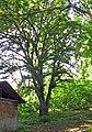 Лісове урочище Крістерів, вул. Осиповського, 2-а.jpg