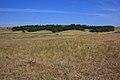 Перелесок к востоку - panoramio.jpg