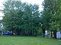 Рощица - panoramio (3).jpg