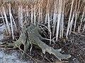 Спускання води в Святошинському озері. IMG 5821.jpg