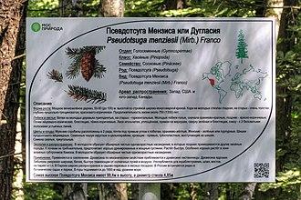 Табличка «Псевдотсуга Мензиса или Дугласия» на участке 14 Бирюлёвского дендрария
