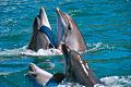 Танец дельфинов.jpg