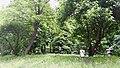 Хрещатий парк у Києві.jpg