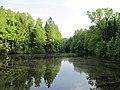 Южны пруд летом ,отражения.jpg