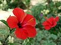 جاذبه های طبیعی و گردشگری استان قم، گلها و گیاه های بومی استان.jpg