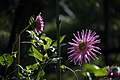 عکس از گلها و گیاهان باغ بوتانیکال تفلیس - گرجستان 23.jpg