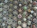 گلخانه کاکتوس دنیای خار در قم. کلکسیون انواع کاکتوس 33.jpg