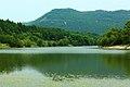 嘉陵风光之苟溪河湿地 - panoramio (2).jpg