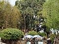 大观楼公园内景色 - panoramio - 江上清风1961 (4).jpg