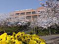 東北福祉大学管理棟写真(桜).jpeg