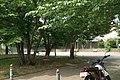 東高根森林公園 - panoramio (54).jpg