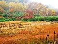 栂池自然園 - panoramio (1).jpg