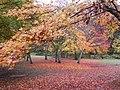 絨毯のような(Like a pink carpet) - panoramio.jpg