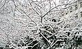 美丽雪景 - panoramio - 李庚.jpg