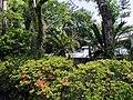 青島亜熱帯植物園 - panoramio (1).jpg