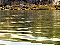 008 Lake Titicaca Peru 3055 (15178802301).jpg