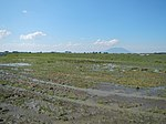 03306jfBirds Sanctuary Ducks Wetland Marshes Rice Fields Candaba Pampangafvf 04.JPG