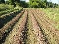 0581jfLandscapes Roads Vegetables Fields Binagbag Angat Bulacanfvf 13.JPG