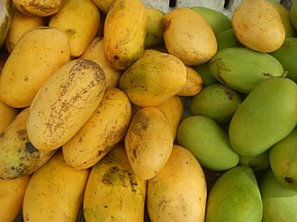 Mango - The Carabao mango, the national fruit of the Philippines. Like other tropical Southeast Asian-type mangoes, it is characteristically polyembryonic and bright yellow when ripe, unlike the subtropical Indian-type mangoes which are monoembryonic and reddish when ripe.