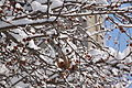 13-02-09 Nemo Snowstorm (Unedited) (80) (8466147841).jpg