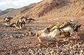 15th MEU finishes sustainment training in Djibouti 121218-M-GW940-072.jpg