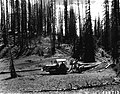 1957. Tractor skidding beetle-killed Engelmann spruce logs to a cutting and stacking point on Coffee Pot Mountain. White Mountain National Forest, Colorado. (34300085531).jpg