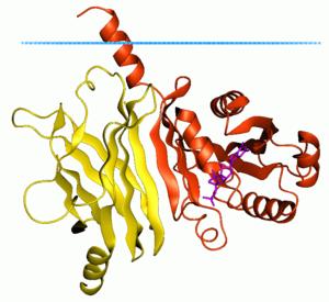 ADP ribosylation factor - Image: 1ksg opm