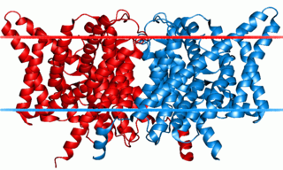 group of transport proteins