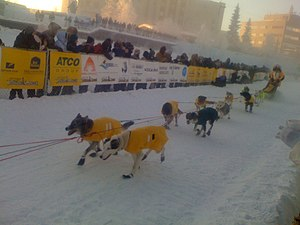 A team of dogs pulls a sled guided by a musher as spectators watch from behind barricades on both sides.