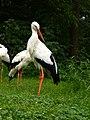 2011-07-05 Zoo Rostock 06.jpg