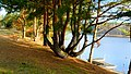 2012 - Jezioro Lipkusz , jesienne widoki. - panoramio (5).jpg