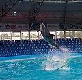 2017-05-16 Show in Kyiv Dolphinarium 11.jpg