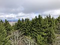 2019-10-27 11 56 42 View north across a Red Spruce forest from the observation tower on Spruce Knob in Pendleton County, West Virginia.jpg