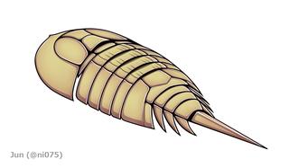 <i>Cyamocephalus</i>