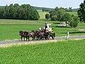 21te Rammenauer Schlossrundfahrt der Pferdegespanne (137).jpg