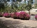 35628 Pájara, Las Palmas, Spain - panoramio.jpg