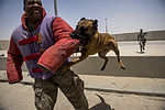 386th ESFS military working dogs 140603-F-FW757-186.jpg