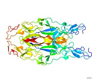 Neurotrophin - Image: 3BUK.pdb