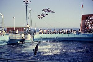 Marineland of the Pacific - Dolphin Show, August, 1962